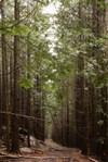 Evergreens_0001_2