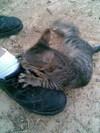 Attack_cat